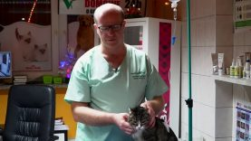 Zarobki weterynarza | strzyżenie shih tzu | zapalenie nerek kota